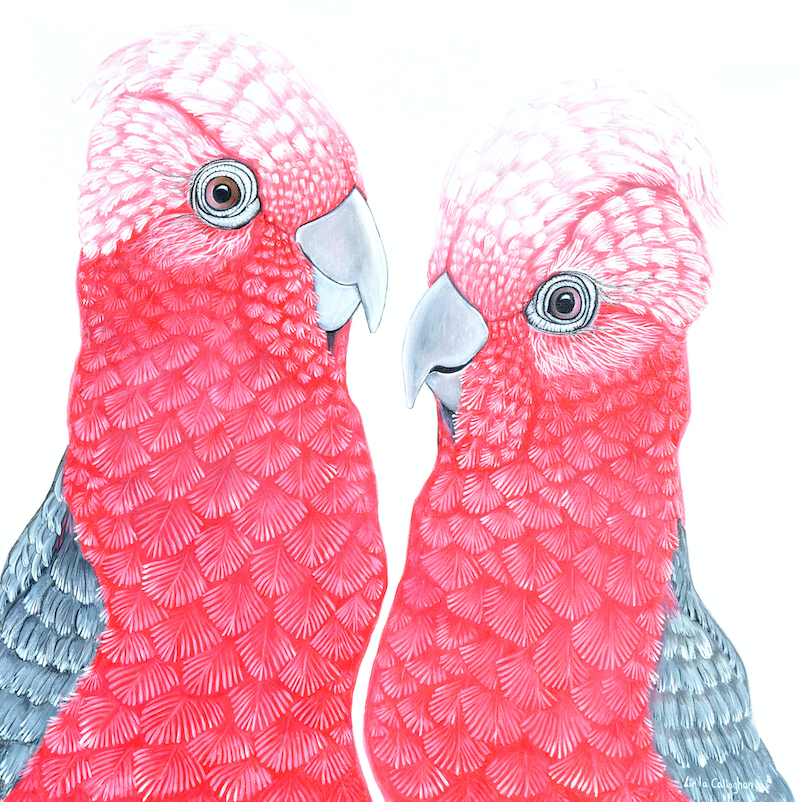(CreativeWork) A Couple of Galahs by Linda Callaghan. Acrylic Paint. Shop online at Bluethumb.