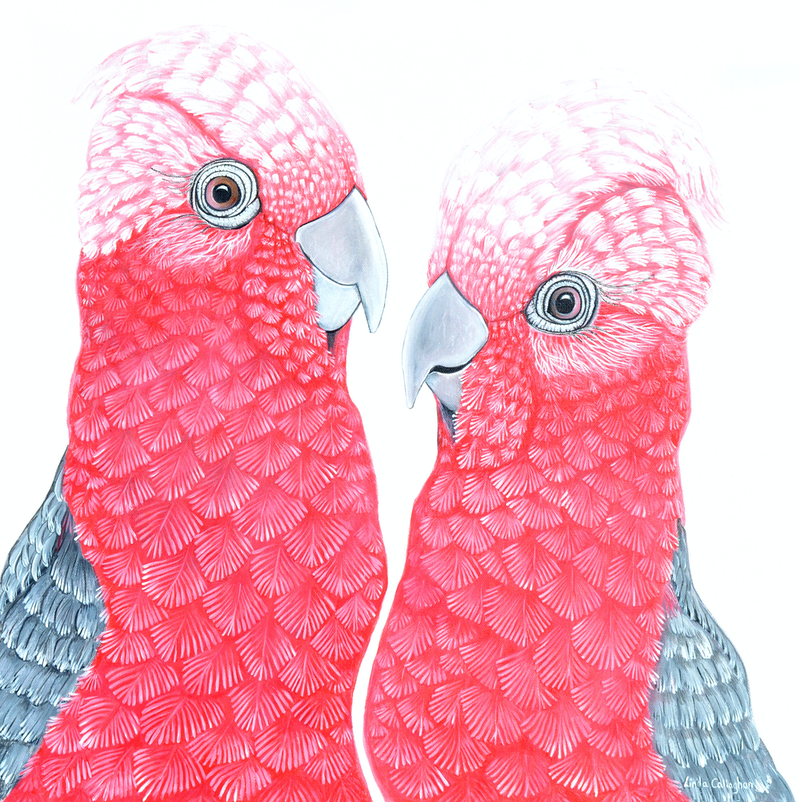 (CreativeWork) A Couple of Galahs by Linda Callaghan. acrylic-painting. Shop online at Bluethumb.