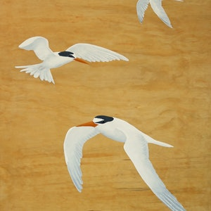 (CreativeWork) Twists And Terns by Barry Johnson. #<Filter:0x00007f1f7b214390>. Shop online at Bluethumb.