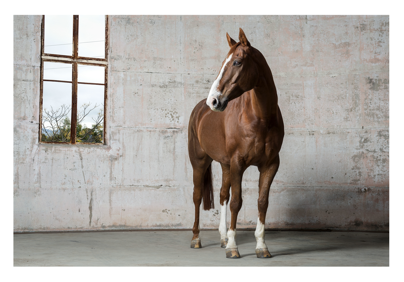 (CreativeWork) GERRY HORSE SERIES Ed. 5 of 10 by GRACE COSTA. Photograph. Shop online at Bluethumb.