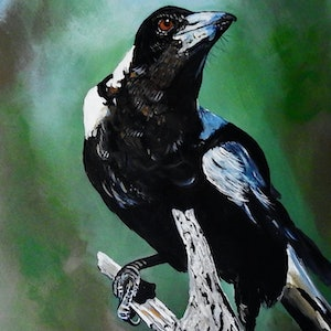 (CreativeWork) Proud Magpie by Julie Hollis. acrylic-painting. Shop online at Bluethumb.