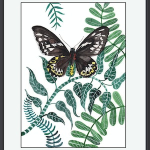(CreativeWork) Richmond Birdwing Butterfly by Sally Browne. #<Filter:0x000055fa3ecdcee8>. Shop online at Bluethumb.