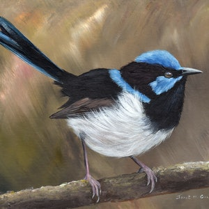 (CreativeWork) Superb Fairy Wren by Janet Graham. #<Filter:0x00007fa566e90f30>. Shop online at Bluethumb.