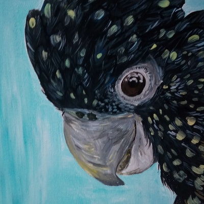 (CreativeWork) Rocky The Cocky - Black Cockatoo with personality  by Ilanit Pocock. acrylic-painting. Shop online at Bluethumb.