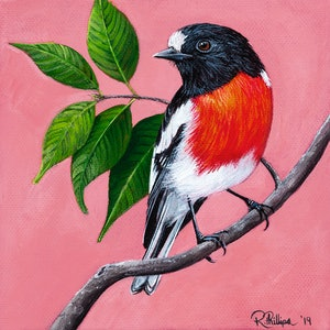 (CreativeWork) Scarlet Robin by Rebecca Phillips. acrylic-painting. Shop online at Bluethumb.