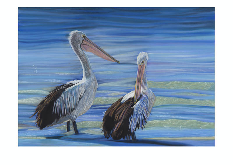(CreativeWork) Australian Pelicans Ed. 2 of 20 by Rebecca Smalley. Print. Shop online at Bluethumb.