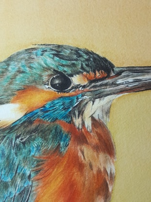 (CreativeWork) Golden Hour - Kingfisher by Tegan Carney. Watercolour Paint. Shop online at Bluethumb.