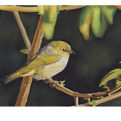 (CreativeWork) Silvereye Ed. 1 of 20 by Rebecca Smalley. Print. Shop online at Bluethumb.