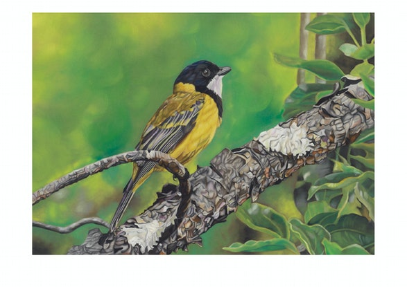 (CreativeWork) Golden Whistler Ed. 1 of 20 by Rebecca Smalley. Print. Shop online at Bluethumb.