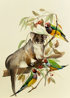 (CreativeWork) Possum with Gouldian finches by Inna Ten. Watercolour Paint. Shop online at Bluethumb.