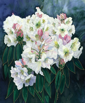 (CreativeWork) White Rhododendrons Ed. 2 of 30 by Gillian Radford. Print. Shop online at Bluethumb.