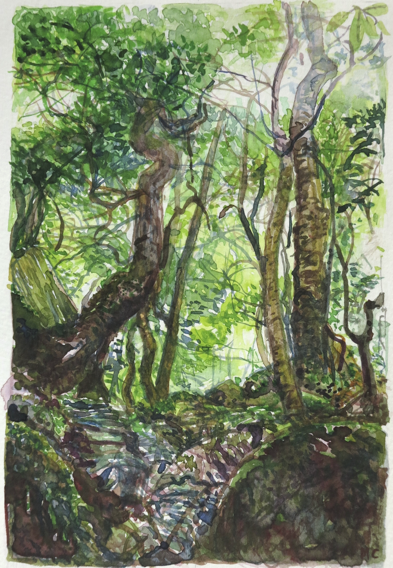 (CreativeWork) Jungle Circuit 31 by Meredith Cooper. Watercolour Paint. Shop online at Bluethumb.