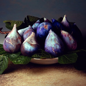 (CreativeWork) Tuscan Figs Ed. 1 of 9 by alex buckingham. #<Filter:0x00007f3c23505148>. Shop online at Bluethumb.