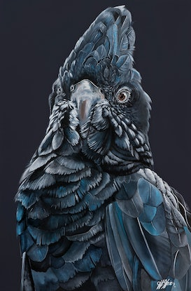 """(CreativeWork) """"BRONSON"""" The Black Cockatoo Reproduction Stretched Canvas Ed. 3 of 100 by HEYLIE MORRIS. Print. Shop online at Bluethumb."""