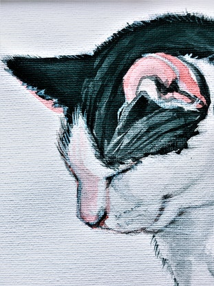 (CreativeWork) Shhh! It's nap time - Cadbury the cat  by HSIN LIN. Watercolour Paint. Shop online at Bluethumb.