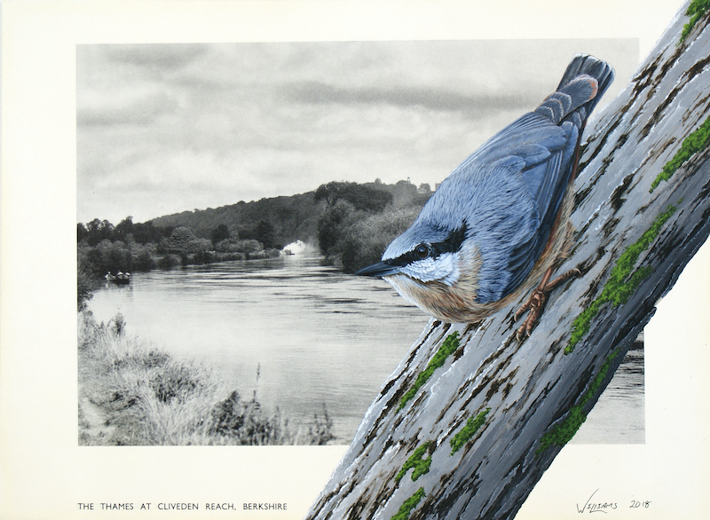 """(CreativeWork) Nuthatch on vintage (1935) book page from """"The English Countryside - A Book of Photographs by J. Dixon-Scott"""" by Craig Williams. Acrylic Paint. Shop online at Bluethumb."""