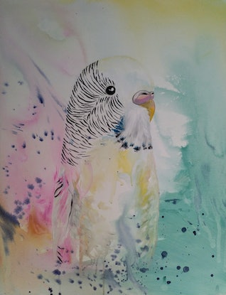 (CreativeWork) Budgie   by Amanda Skye. Acrylic Paint. Shop online at Bluethumb.