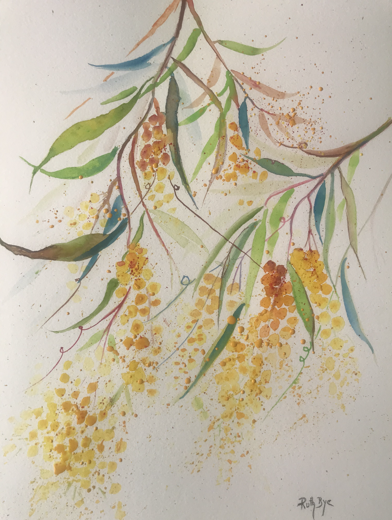 (CreativeWork) Wattle  by Ruth Bye. Watercolour Paint. Shop online at Bluethumb.