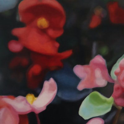 (CreativeWork) Begonias by Joanna Poulson. oil-painting. Shop online at Bluethumb.