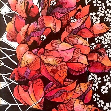 (CreativeWork) Creeping  Bougainvillea 3 by Tania Daymond. Drawings. Shop online at Bluethumb.