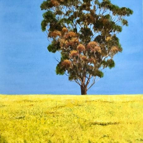 (CreativeWork) Canola Fields by Jenine Bell. Oil Paint. Shop online at Bluethumb.