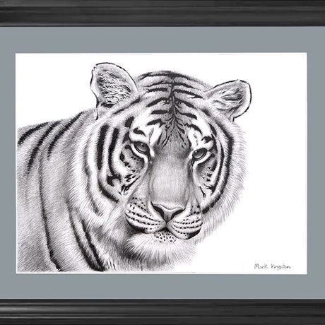 (CreativeWork)  Tiger Portrait Drawing by Mark Kingston. Drawings. Shop online at Bluethumb.