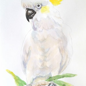 (CreativeWork) White Cockatoo 2 by Olga Kolesnik. #<Filter:0x00007fef2dcb67d0>. Shop online at Bluethumb.