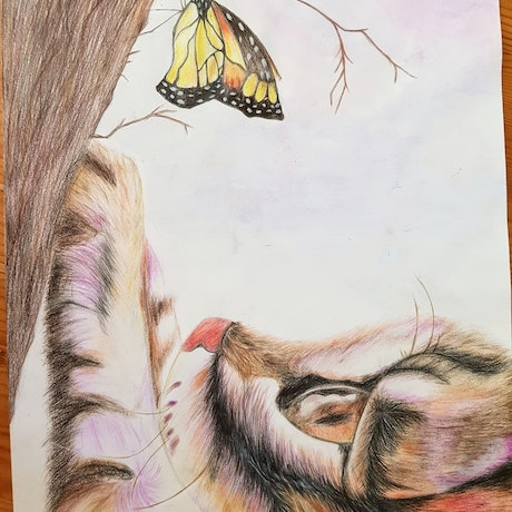 (CreativeWork) Cat and butterfly by Sofia Vladimirov. Drawings. Shop online at Bluethumb.