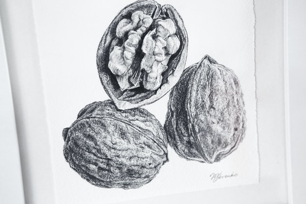 (CreativeWork) Walnut Study by Mariya Rovenko. Drawings. Shop online at Bluethumb.