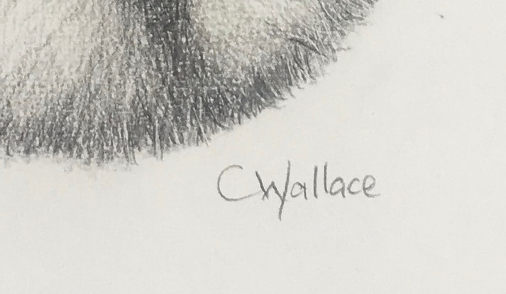 (CreativeWork) Cute Koala by Catherine Wallace. Drawings. Shop online at Bluethumb.