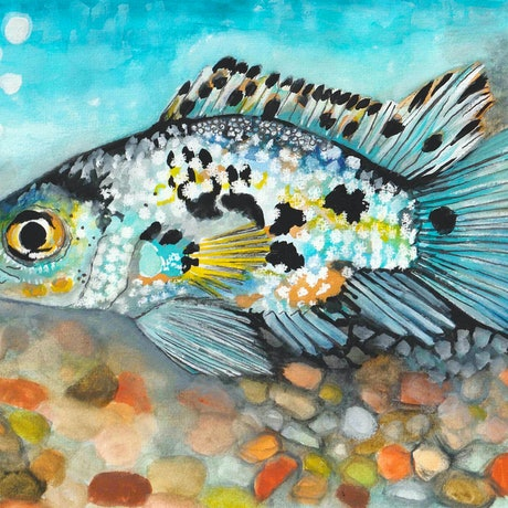 (CreativeWork) Electric Blue Jack Dempsey Cichlid by Kirsty Godwin. Mixed Media. Shop online at Bluethumb.