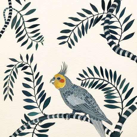 (CreativeWork) Cockatiel Daphne by Sally Browne. Watercolour Paint. Shop online at Bluethumb.
