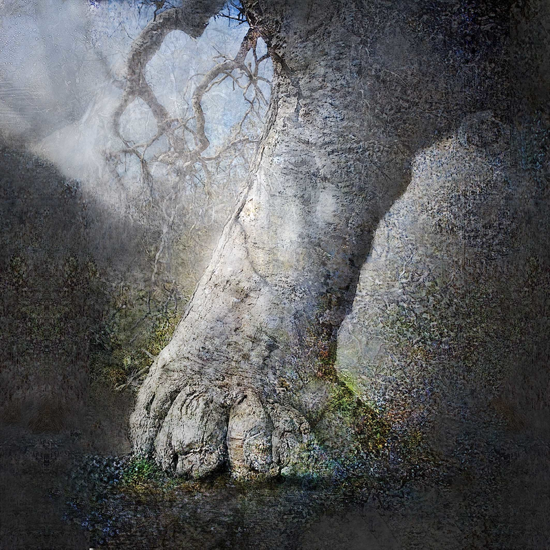(CreativeWork) Cider Gum tree Ed. 2 of 10 by Chris Morgan. Photograph. Shop online at Bluethumb.