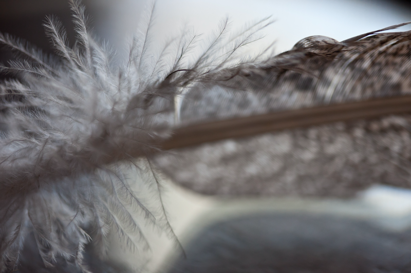 (CreativeWork) Turkey Feather 7777 Ed. 2 of 250 by Alison Shirley. Photograph. Shop online at Bluethumb.
