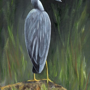 (CreativeWork) White Faced Heron by Janet Graham. #<Filter:0x00007fef2deda638>. Shop online at Bluethumb.