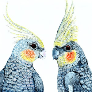 (CreativeWork) Cheeky Cockatiels by Linda Callaghan. #<Filter:0x00007f4458e64a08>. Shop online at Bluethumb.