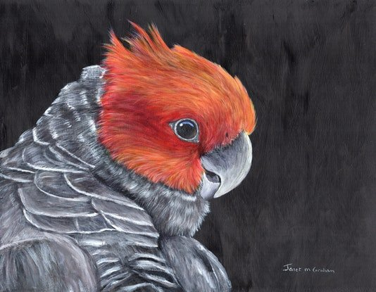 (CreativeWork) Gang - Gang Cockatoo by Janet Graham. Acrylic Paint. Shop online at Bluethumb.