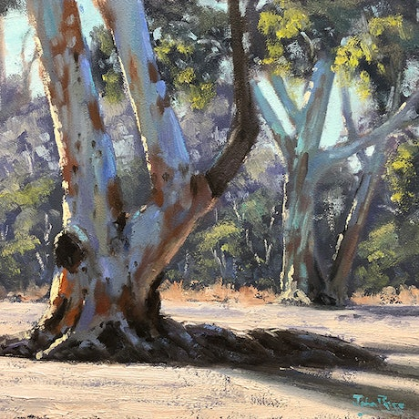(CreativeWork) Gums At Ormiston Gorge by John Rice. Oil Paint. Shop online at Bluethumb.