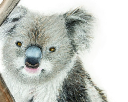 (CreativeWork) Cuddles - Koala Ed. 9 of 100 by Johanna Larkin. #<Filter:0x00007f1f7ce3c0b8>. Shop online at Bluethumb.
