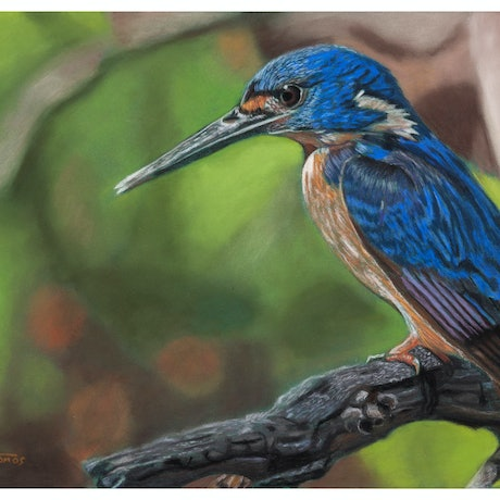 (CreativeWork) Azure Kingfisher Original Pastel A3 by Gary Thomas. Drawings. Shop online at Bluethumb.