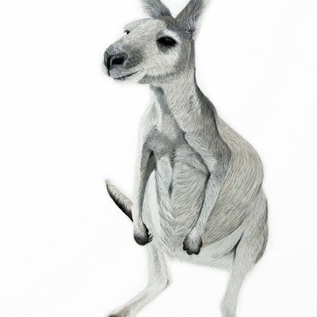 (CreativeWork) Boo the Roo Ed. 12 of 100 by Johanna Larkin. Print. Shop online at Bluethumb.