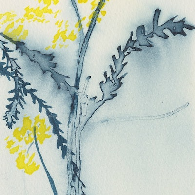 (CreativeWork) Studio View - Wattle Study V by Kylie Fogarty. #<Filter:0x00005591c2205bf8>. Shop online at Bluethumb.