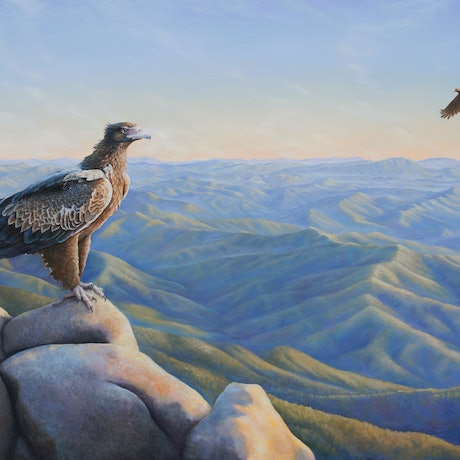 (CreativeWork) Boundless Sky - Wedgetail Eagle by Katherine Castle. Oil Paint. Shop online at Bluethumb.