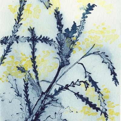 (CreativeWork) Studio View - Wattle Study III by Kylie Fogarty. #<Filter:0x00005591c24c25a8>. Shop online at Bluethumb.