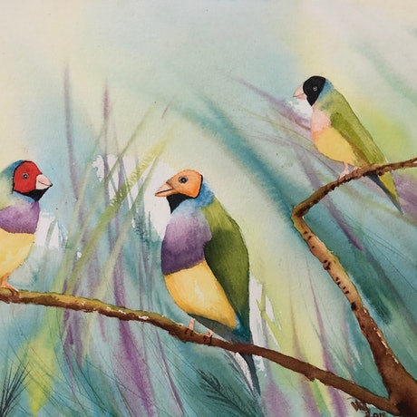 (CreativeWork) Gouldian Finches by Veronica Hodges. Watercolour Paint. Shop online at Bluethumb.