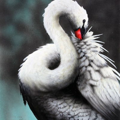 (CreativeWork) EUROPEAN  MUTE SWAN by Paul Margocsy. #<Filter:0x00007f08510e1798>. Shop online at Bluethumb.