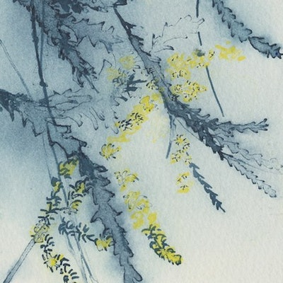 (CreativeWork) Studio View - Wattle Study VI by Kylie Fogarty. #<Filter:0x00005591c23ae018>. Shop online at Bluethumb.
