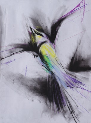 (CreativeWork) Bee Eater by Roland Weight. Drawings. Shop online at Bluethumb.