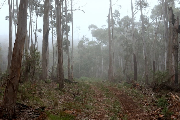 (CreativeWork) Mount Macedon In The Mist Ed. 1 of 10 by Allan Maxwell. Photograph. Shop online at Bluethumb.