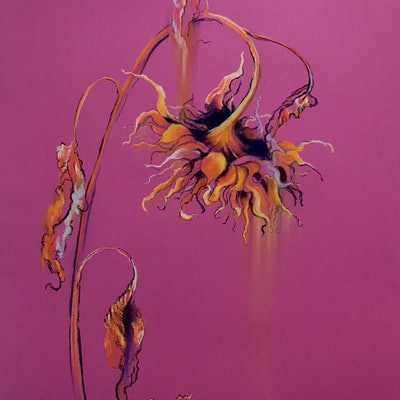 (CreativeWork) Sunflower on Violet by Lucinda Leveille. Drawings. Shop online at Bluethumb.